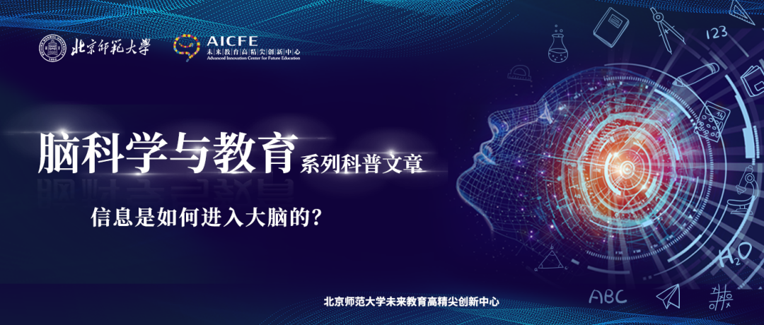 脑科学与教育:信息是如何进入大脑的?