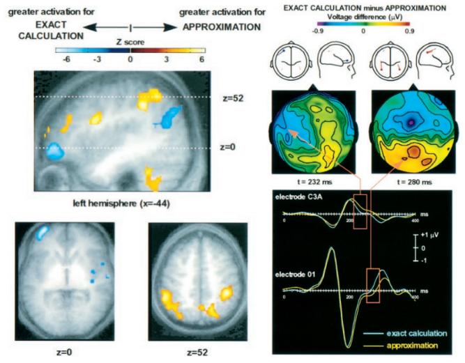 连载30 脑科学与教育蓝皮书:数学能力发展的脑科学研究(下)